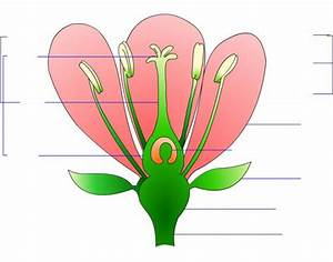 Identify And Label Diagram Of Flower