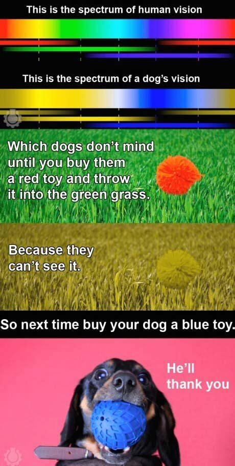 dog vision eyes dogica  dogs  color dog