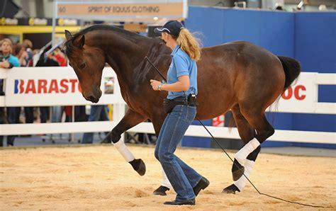 horse mclean asks andrew smart partnership rumba bruce wonder georgia