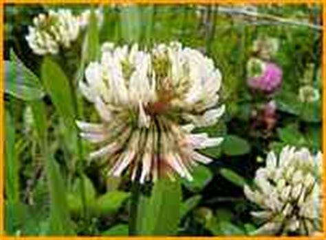 Pflanzen Bestimmen Blumen Blten Flora Botanik Watermelon Wallpaper Rainbow Find Free HD for Desktop [freshlhys.tk]