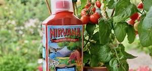Bester Dünger Für Tomaten : tomaten auf balkon und terrasse wichtige tipps f r eine ~ Michelbontemps.com Haus und Dekorationen