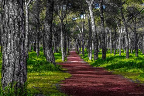 nature photography forest  jose caballero