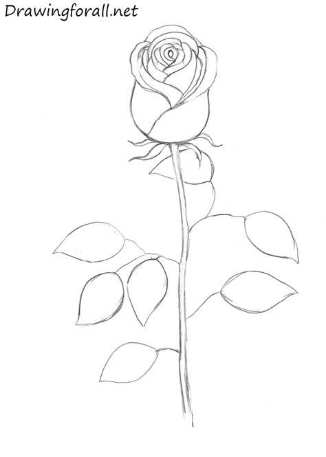 draw  rose drawingforallnet