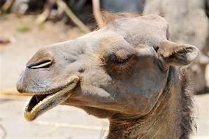 Course De Chameau : quel chameau ce dromadaire jai refait le billet cause bug le blabla de l 39 espace ~ Medecine-chirurgie-esthetiques.com Avis de Voitures