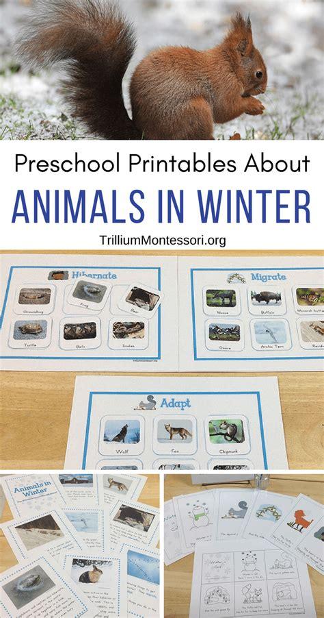animals in winter unit trillium montessori 906 | Animals in Winter Unit