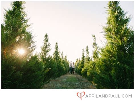 mississippi christmas tree farm 17 best images about engagement photography inspiration on trees pueblo