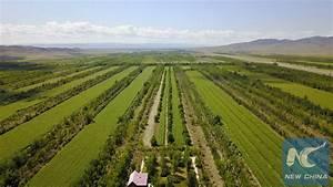 Green revolution turns windy pass in northwest China's ...