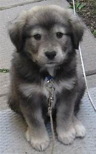 German shepherd husky mix | Cuteness | Pinterest | German ...