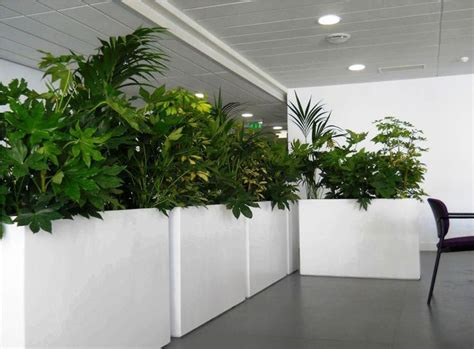 Large Indoor Planters by The 25 Best Large Indoor Planters Ideas On