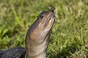 Everglades National Park MowryJournal com