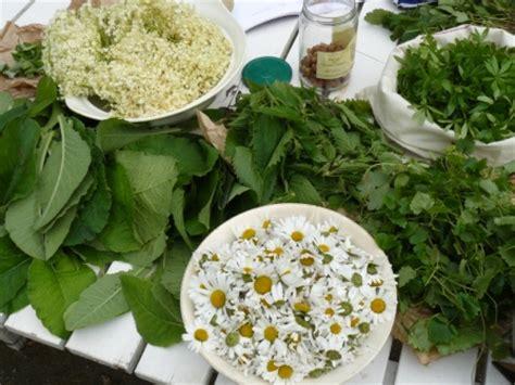 cuisiner les plantes sauvages bien 234 tre au naturel