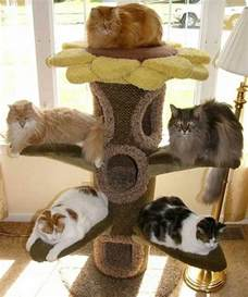 cat trees for large cats 10 best images about cat trees for large cats on