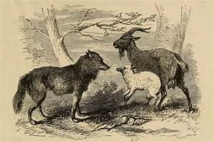 O Lobo  O Cabrito  E A Cabra