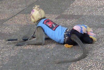 doger monyet padepokan budi rahardjo