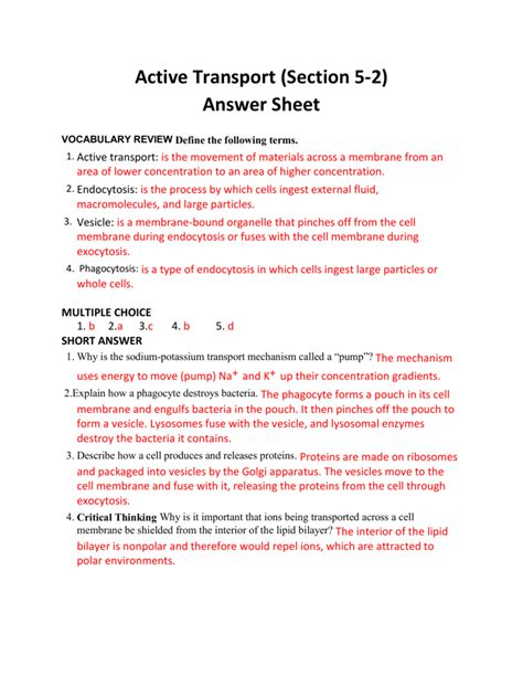 Active Transport Worksheet Answers Resultinfos