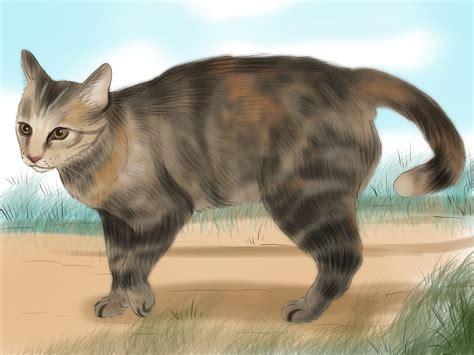 5 Ways to Identify a Tabby Cat - wikiHow