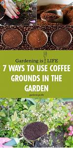 7 ways to use coffee grounds in the garden uses for