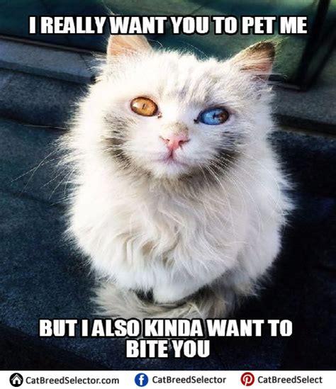 Meme Cat - white cat memes cat breed selector