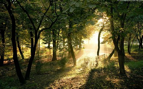 forest, Trees, Nature Wallpapers HD / Desktop and Mobile ...