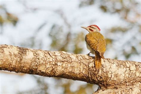 woodpeckers bird wildlife photography by richard and