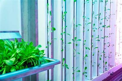 Hydroponic System Growing Grow Vertical Hydroponics Aeroponics