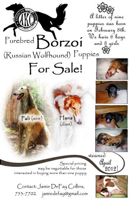 Puppy For Sale Flyer Templates by Kawailoa Borzoi Puppies