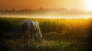 2560x1440 Sunset Meadow & White Horse desktop PC and Mac ...