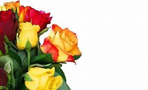 Bilder Blumen Kostenlos Downloaden : blumen gru karte lizenzfreie fotos bilder kostenlos herunterladen ohne anmeldung ~ Frokenaadalensverden.com Haus und Dekorationen