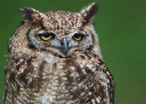 where do birds sleep image gallery sleeping owl