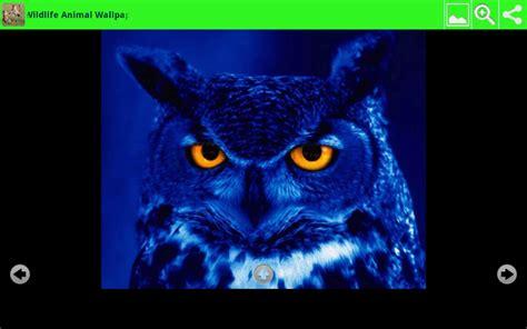 Animal Wallpaper App - wildlife animal wallpapers au appstore for