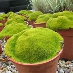 1000 idees sur le theme jardins japonais sur pinterest With amenagement petit jardin mediterraneen 18 amenager son jardin et terrasse 52 idees pour votre oasis