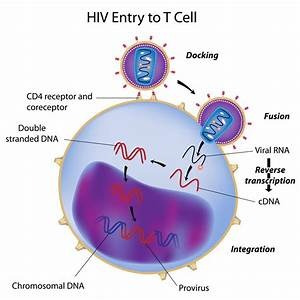 Combined effects of Human Immunodeficiency Virus with ...