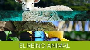El Reino Animal. - YouTube