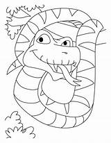 Coloring Snake Boa Constrictor Pages Jumbo Anaconda Python Cobra King Printable Very Library Clipart Azcoloring Popular Coloringhome Getcolorings sketch template