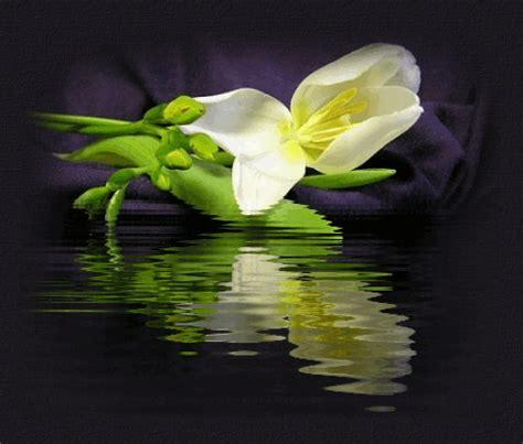 fiore gif un fiore per augurarti una buona serata su parole e pensieri