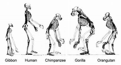 Evolution Selection Natural Introduction Quiz Proprofs Questions
