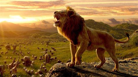 wallpaper simba  lion king