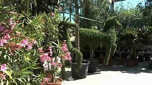Plantes Et Jardin : les jardins de provence fleurs plantes et quipement de ~ Melissatoandfro.com Idées de Décoration