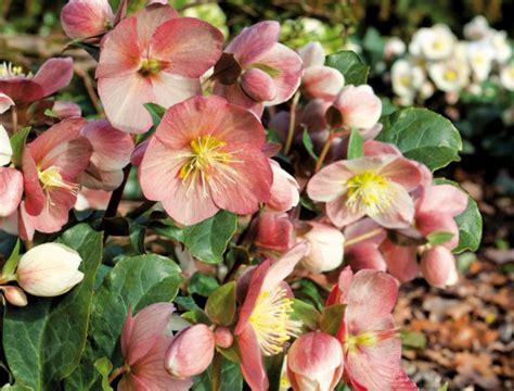 Die Besten Balkonpflanzen winterharte balkonpflanzen die besten sorten