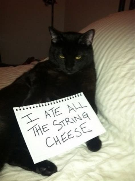 animal shaming signs