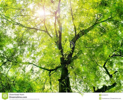 Sunlight Through The Green Trees Stock Image  Image 22463075