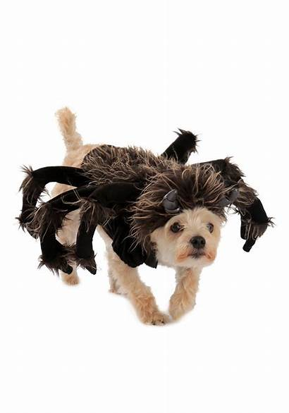 Costume Dog Tarantula Halloweencostumes Write