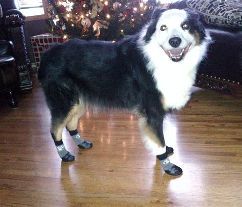 Grippers? Non Slip Dog Socks   Dog socks and Dog
