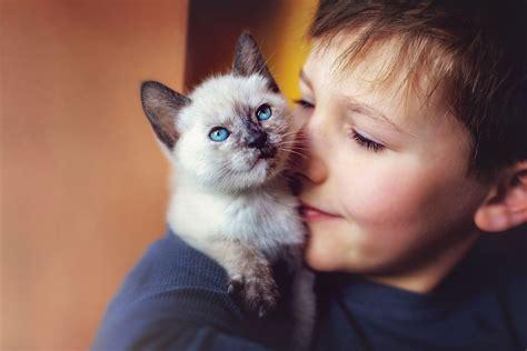 cat  human years