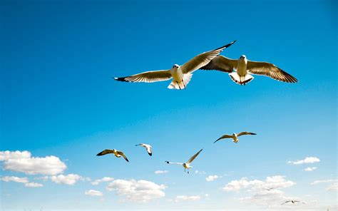 wallpaper  albatross wings sky flying