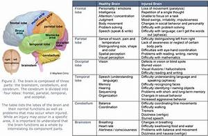 Brain Lobes And Function Chart