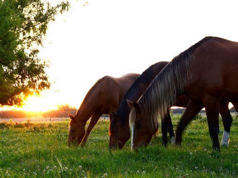 como alimentar   caballo correctamente roberto garrudo