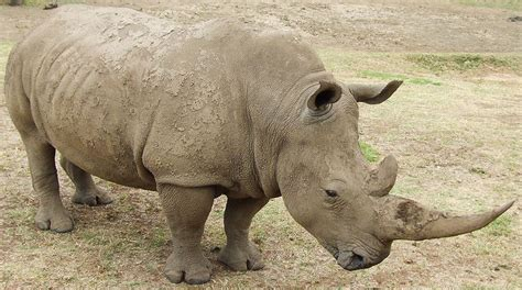 The Most Endangered Animal Species In The United Kingdom