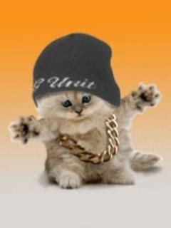 hop cat hip hop cat humores y amores