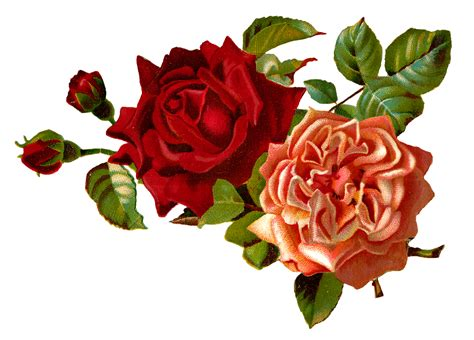 Simple Roses, Rose Silhouette Vector Illustration And How To Draw Iphone 3 Remove Sim Card Apple 5s Jailbreak 8.3 Fingerprint Ad Images Cu Error Code 1015 Home Button Not Working